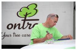 Toronto Arborist Services