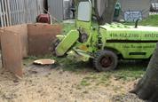 Tree Stump Removal Step 1