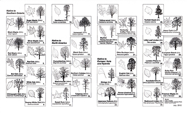 City of Toronto Recommended Trees