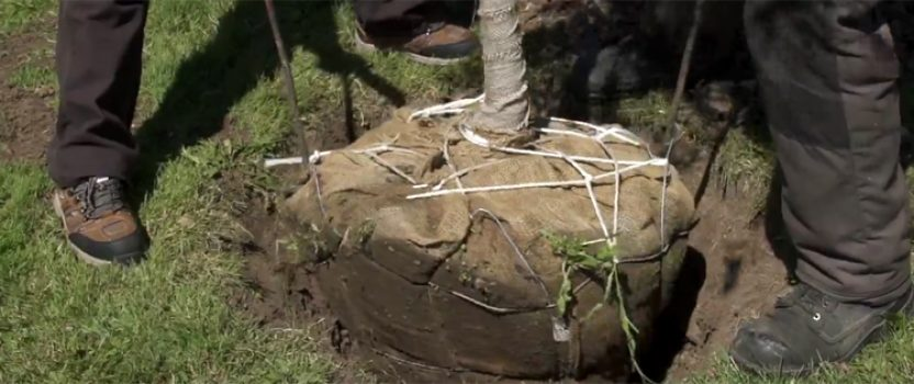 The root cause of tree issues