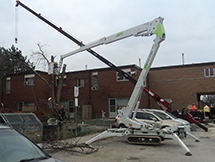 Tree Removal Service Using a Spider Lift