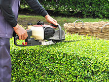 Gardener Trimming Green Bush with Trimmer Machine in an East York Property