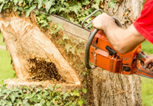 A Tree Care Professional Cutting an Over Grown Tree Trunk in an Etobicoke Property