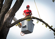 Tree Pruning Service Arborist Cutting a Branch in a Markham Property