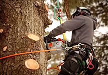 Arborist Cutting Branches Off Tree