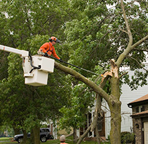 Arborist Cutting Broken Tree Limb