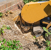Tree stump grinder extraction machine at work in a Richmond Hill Property