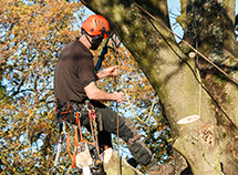 Tree surgeon hanging from a branch in a property in Rosedale