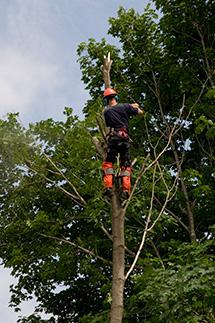 Tree Arborist working in Scarborough