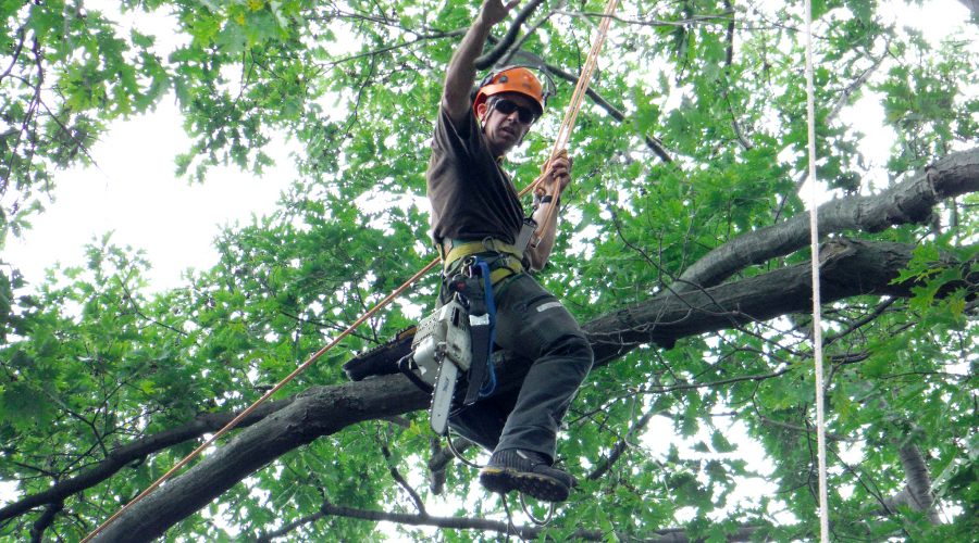 Why it is important for your arborist to be certified?