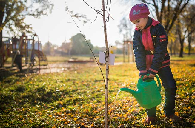 A Boy Watering a Tree