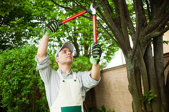 A Worker Pruning a Tree