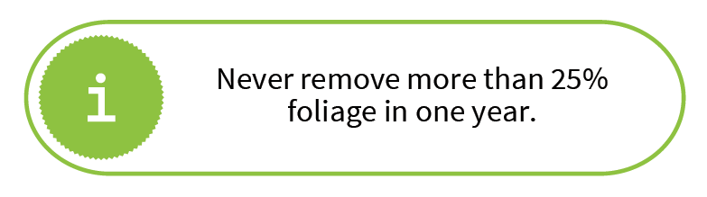 Never remove more than 25% foliage in one year.