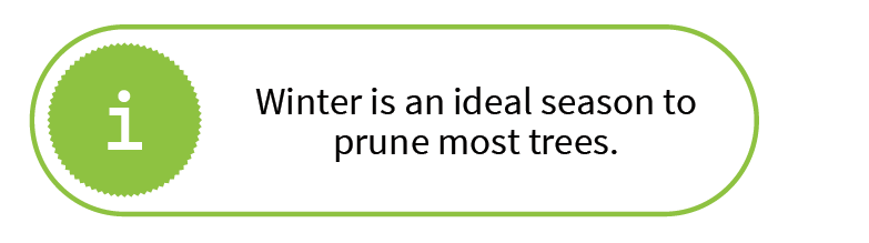 Winter is an ideal season to prune most trees.