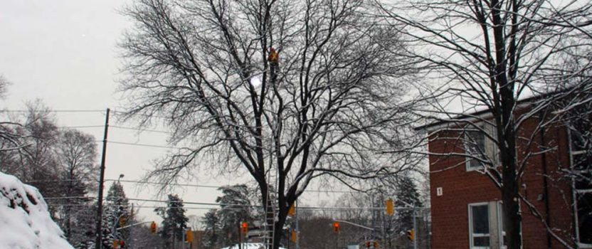 Repair trees damaged in 2013 ice storm