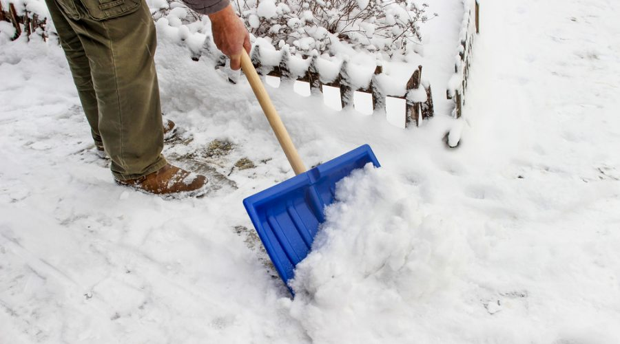 Deicing salt can harm landscape plants