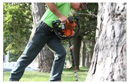 Toronto Tree Service