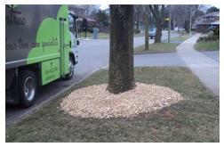 Toronto Tree Mulching