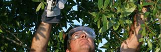 Tree Care Toronto