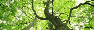 Tree Service Toronto