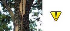 Tree Replacement Toronto