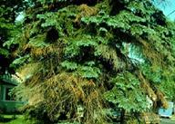 Tree Services Toronto
