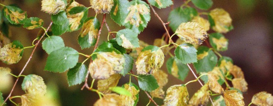 Using pesticides on trees
