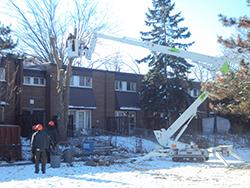 Ash Tree Removal Toronto