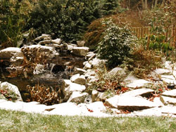 Trees And Shrubs Covered In Snow
