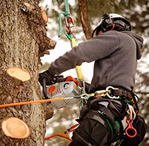 Arborist cutting branches from a tree in Rosedale area