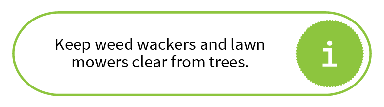Keep weed wackers and lawn mowers clear from trees.