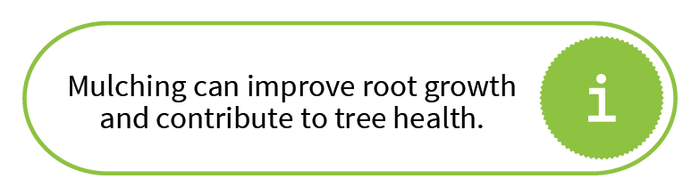 Mulching can improve root growth and contribute to tree health.