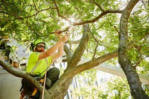 Checking for tree defects