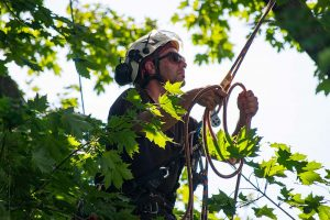 Pruning young trees and structural pruning