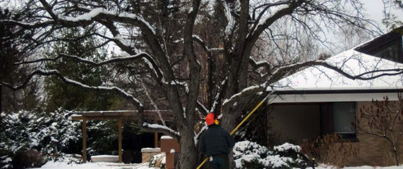 Preparing your trees for winter