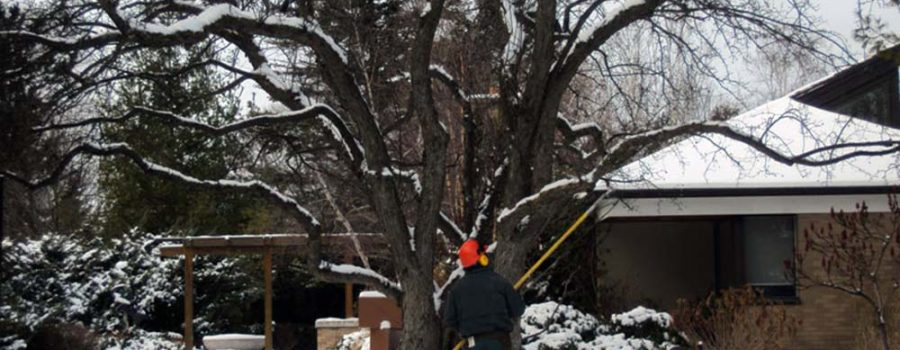 How to recognize damaged trees