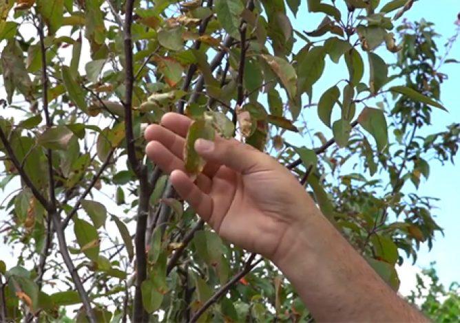 Plant Health Image