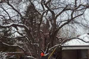 Winter Pruning and Removal